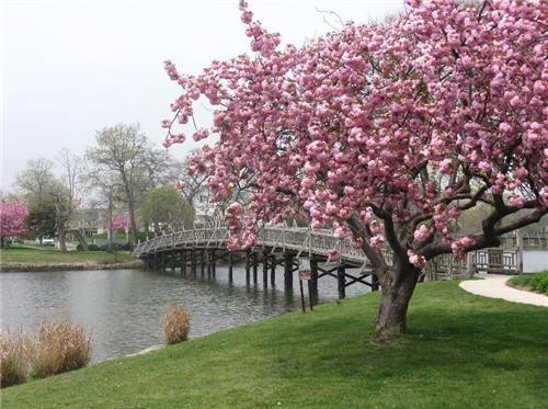 79-million-swanhurst-serenity-in-spring-lake-new-jersey-16