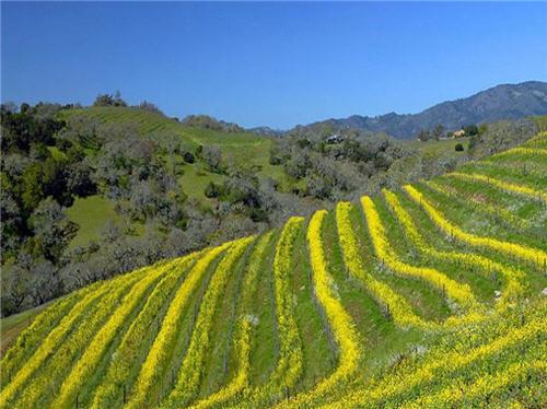 119-million-luxury-wine-country-estate-compound-glen-ellen-california-2