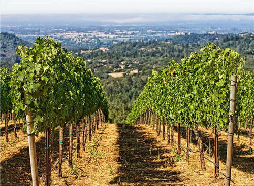 158-million-wine-country-living-in-santa-rosa-california-13