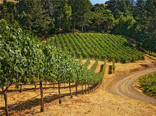 158-million-wine-country-living-in-santa-rosa-california-15