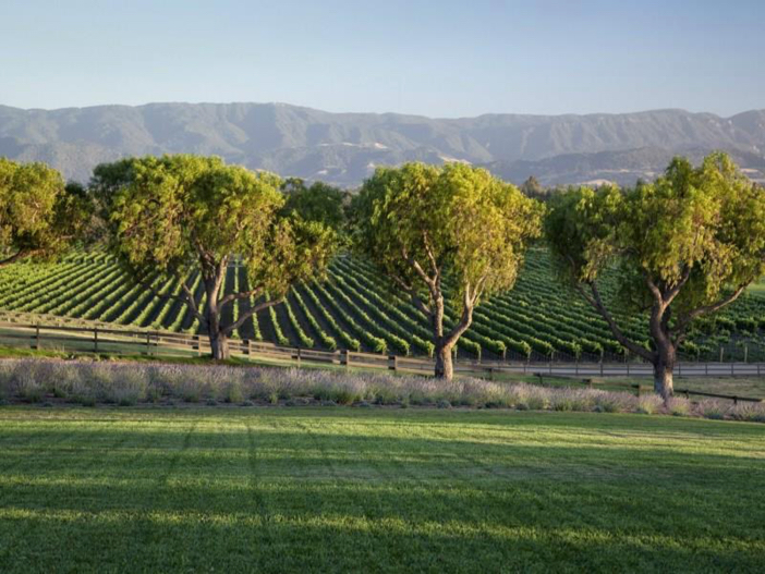 $19 Million Equestrian and Vineyard Estate in California 3