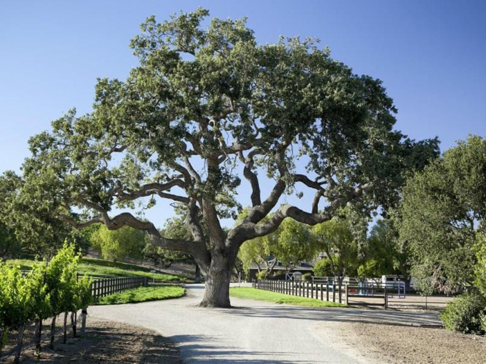 $19 Million Equestrian and Vineyard Estate in California 5