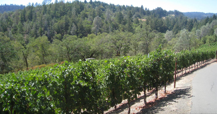$18.5 Million Mediterranean Mansion and Vineyard in California 4