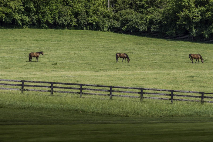 1-8-million-equestrian-country-home-in-nicholasville-kentucky-26